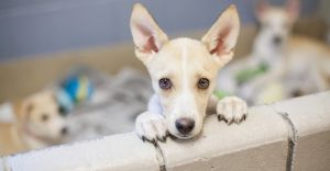 How to Search for Dogs and Puppies for Sale