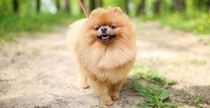 Long-Haired Dogs: Top Breeds and Grooming Needs
