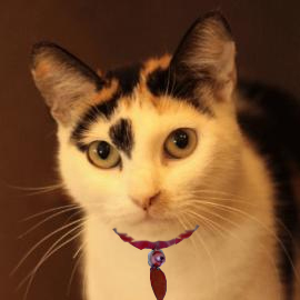 adoptable cat photo