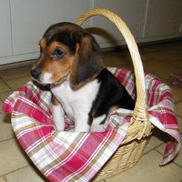 Baxter in his basket