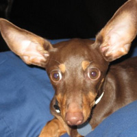 Penny is all ears