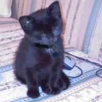 Blind black kitten