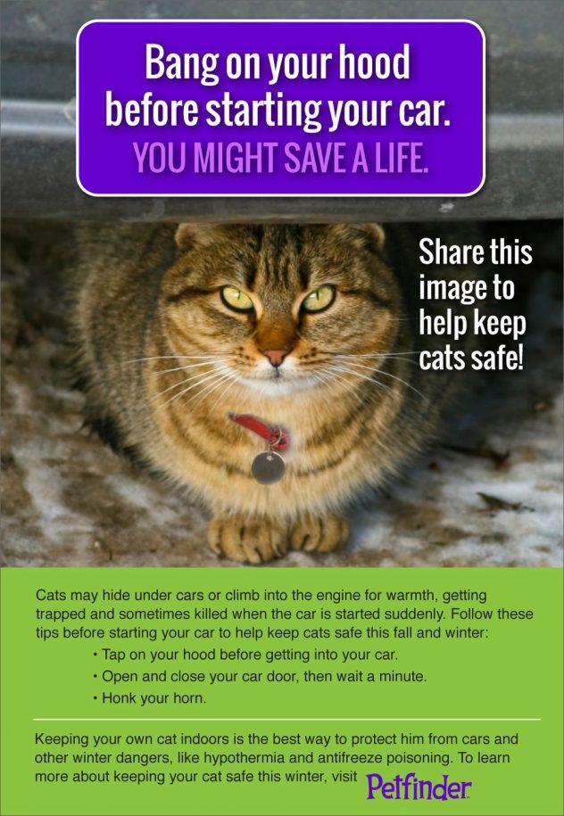 Bang on your hood to save a life!