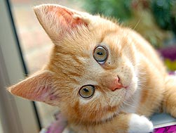 brown and white kitten