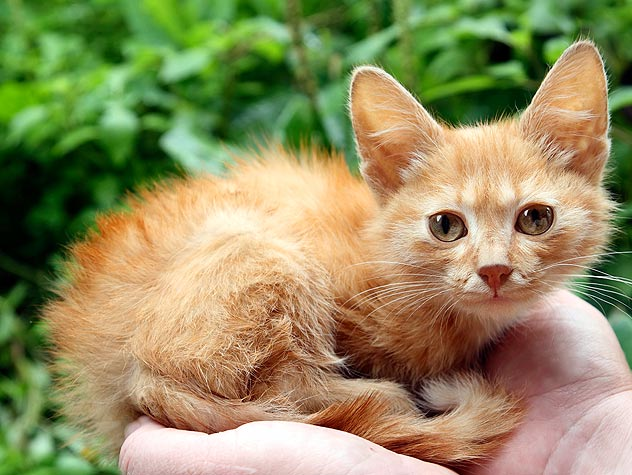 Helping Abandoned, Stray Cats and Kittens
