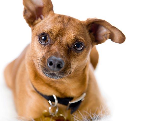 Photograph Deaf Dogs Like a Pro
