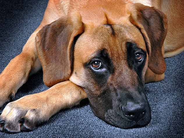 Invermectin Overdose in Dogs