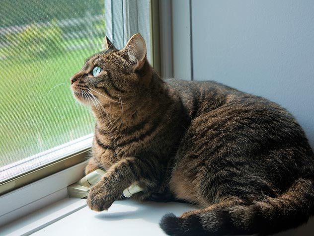 Transitioning Outdoor Cat to Indoors