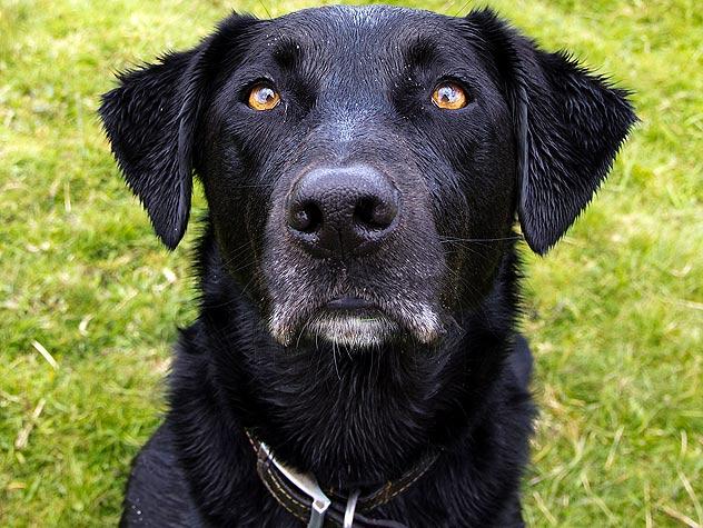 A Look at Pet Insurance