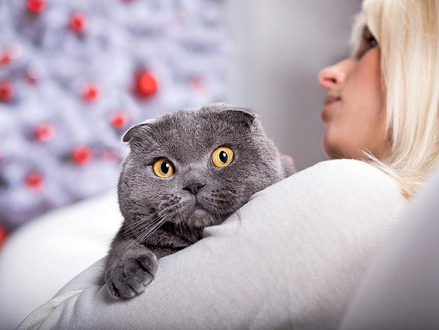 Do New Cats Need to be Litter Trained?