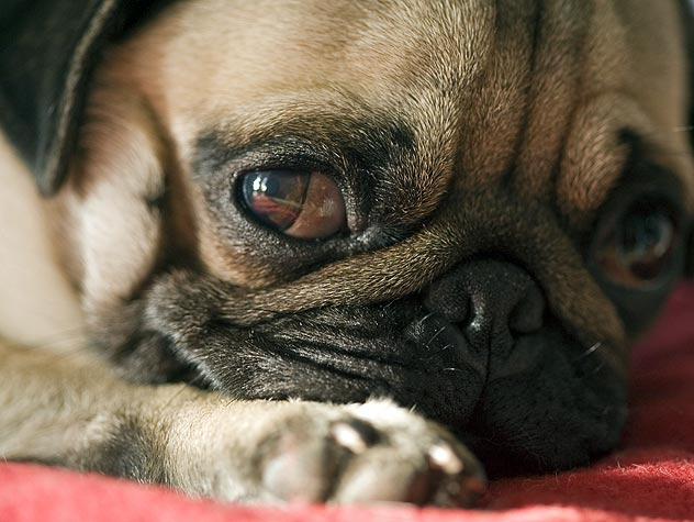 Epilepsy in Dogs: Causes and Symptoms