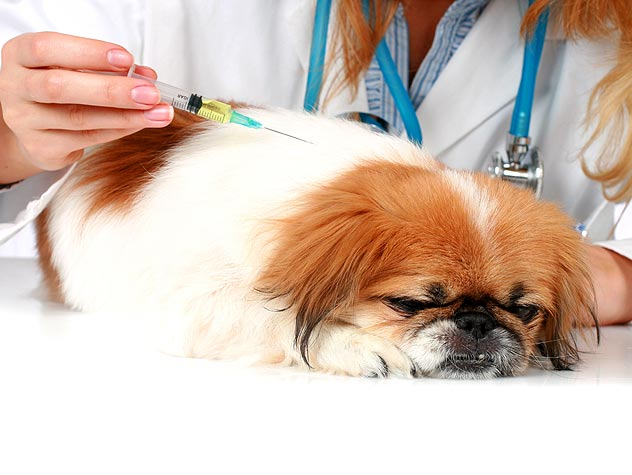 Dog Vaccination Schedule