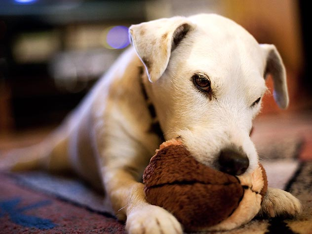 How Do I Stop My Dog From Chewing?
