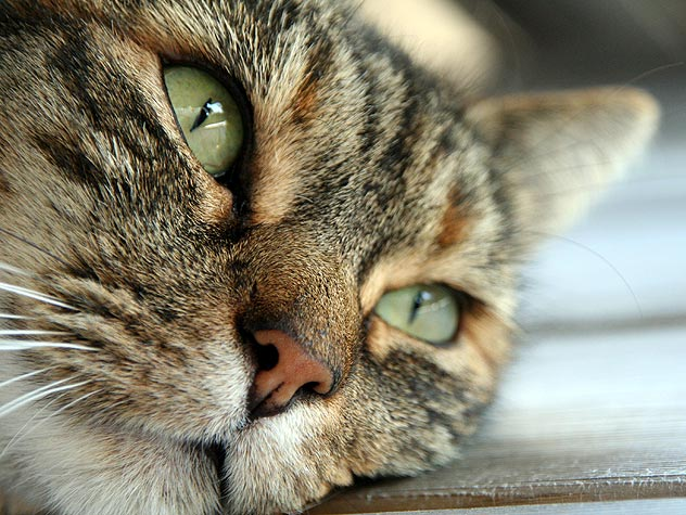 Top 5 Serious Cat Illnesses Only Your Vet Can Diagnose