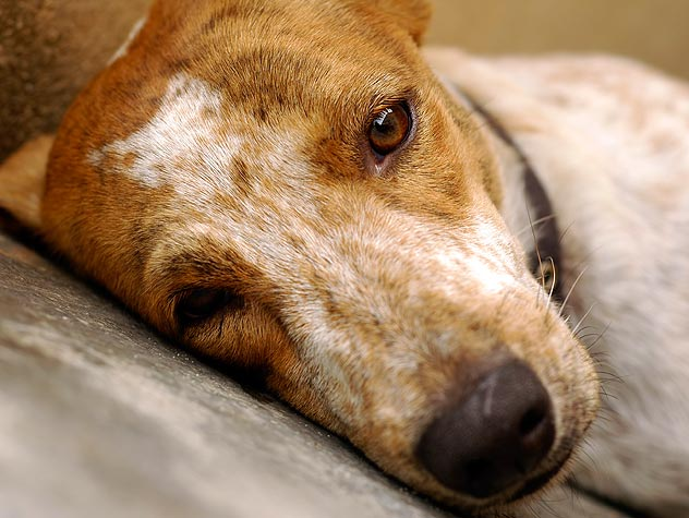 """a discussion on the cruelty on animals But some people are just cruel to their animals when they want to get  """"in  addition, the discussion paper canvasses changes to legislation to."""