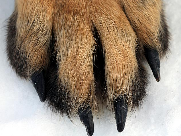 Caring for Your Pup's Paws in the Winter