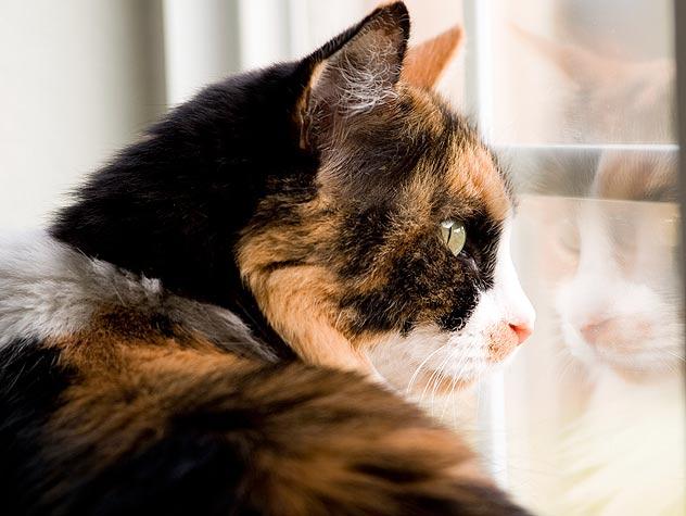 Starting a Non-Profit Organization to Help Animals