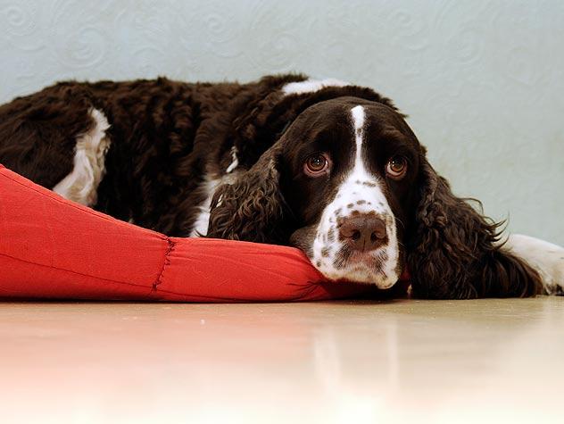 Symptoms of Mastitis in Dogs