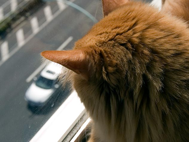 Get Your Cat to Like the Car