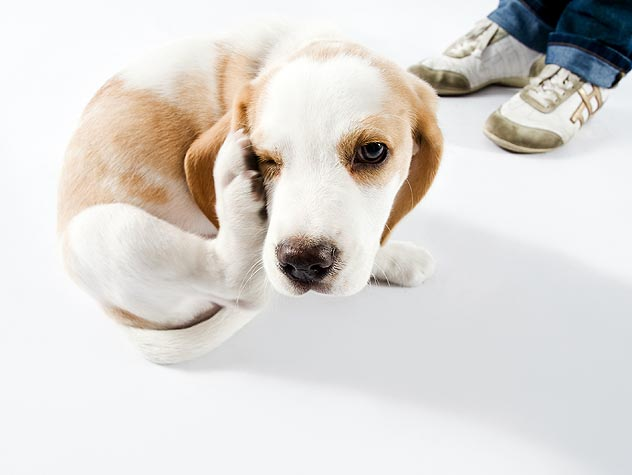 Causes of Dog Skin Problems