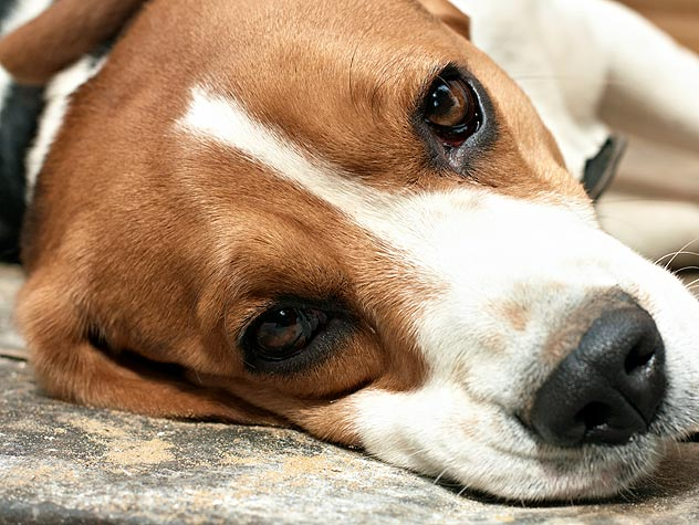 Treating Bone Cancer in Dogs