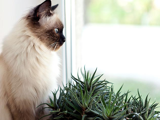 Plants Toxic to Cats and Dogs
