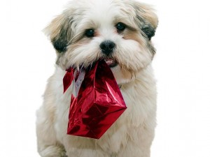 holiday pet-safety