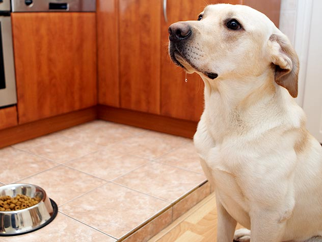 How Often Should You Feed Your Dog?