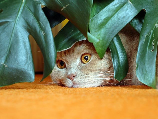 Safeguarding Plants From Cats