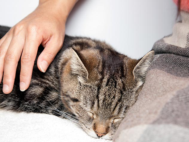 Petfinder's Top Ten Tips for a Contented Cat