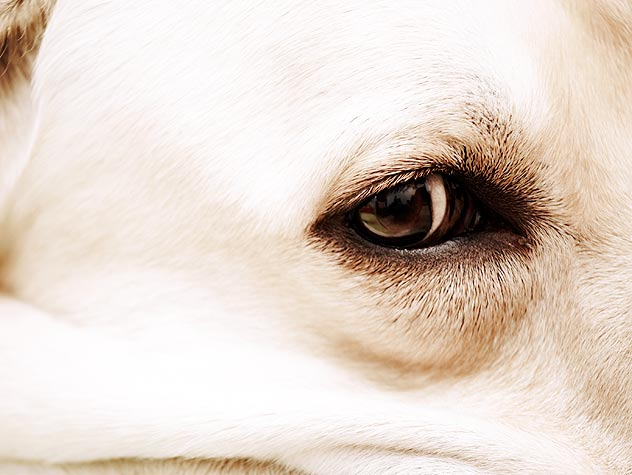 Preventing and Treating Eye Infections in Dogs