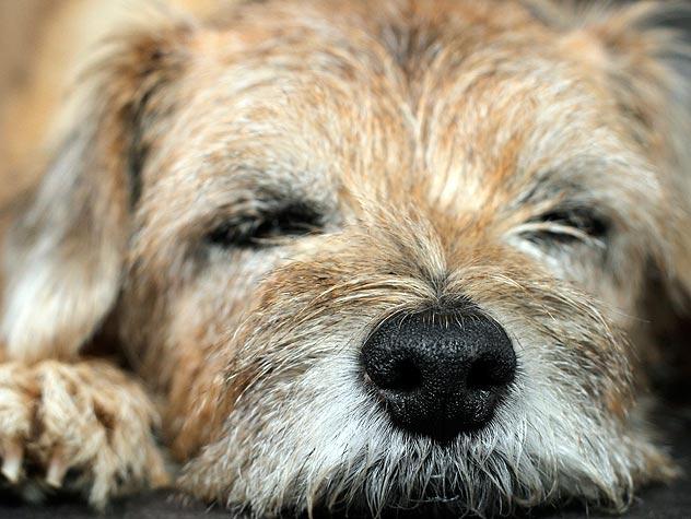 Preventing Bloat in Dogs