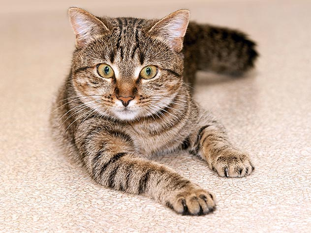 Tips for a Healthy Cat