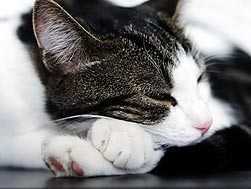 Subtle Signs Your Cat May Be Sick
