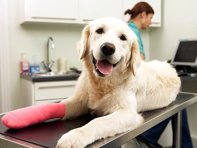 How to Care for Your Pet's Bandage, Splint or Sling