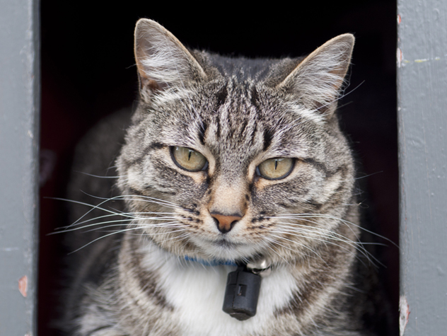Causes of Feline Stomatitis