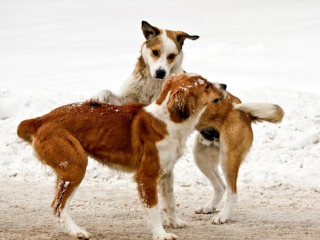 Protect Your Dog from Winter Dog-Park Dangers