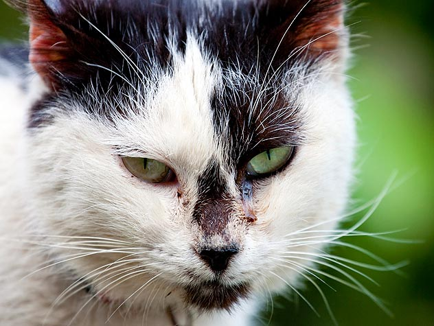 How to Trap-Neuter-Return (TNR) Feral Cats