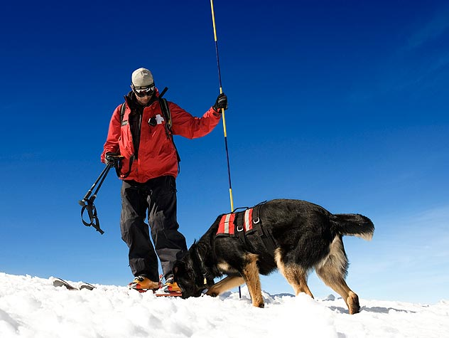 Disaster Search and Rescue Dogs