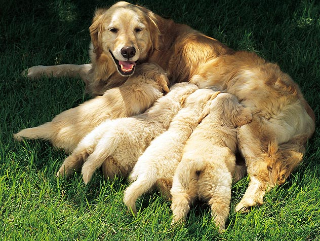 How to Prevent Mastitis in Dogs