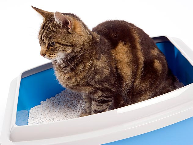 Where Should My Litter Box Go?