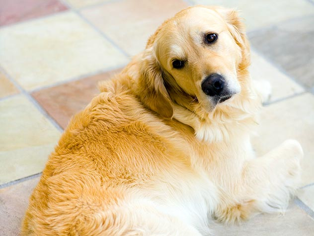 Dog Skin Problems: Introduction