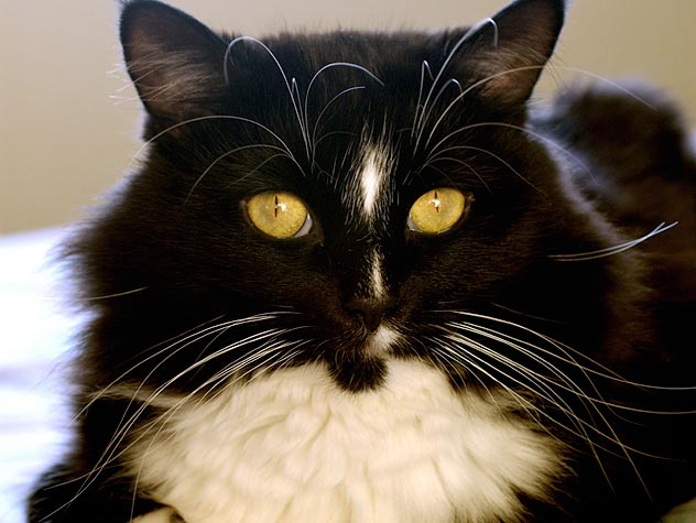 Causes of Liver Disease in Cats