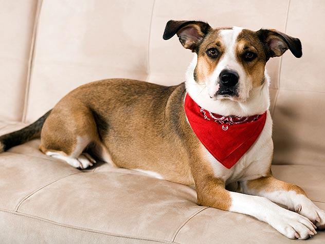 Dogs: Disaster Preparedness Shopping List
