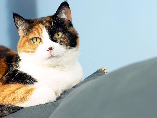 Is Your Cat Constipated?