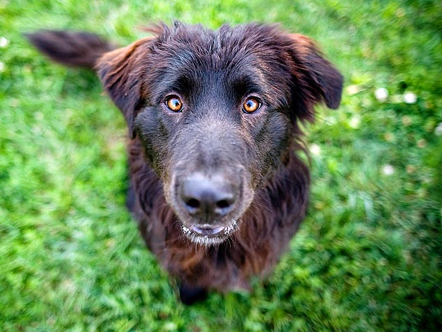 What Is Canine Distemper?