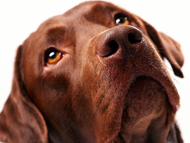 What Constitutes Animal Cruelty?