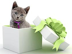 give a pet promise certificate