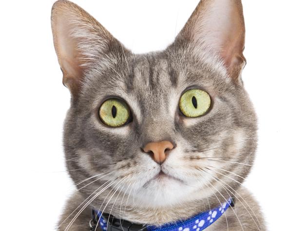 Can You Crate Train a Cat?