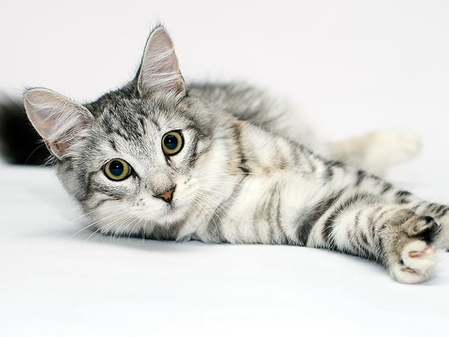 When is a Puppy or Kitten Old Enough to Neuter?